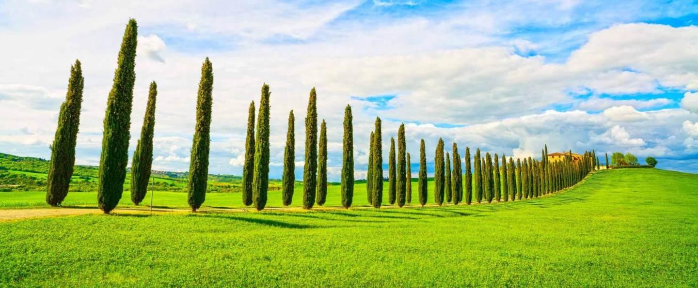 Tour en Vespa por el Chianti