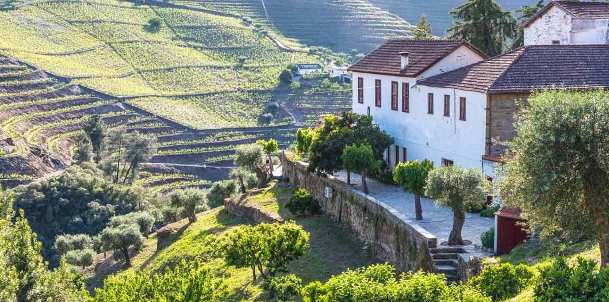 Tour de Vino al Valle del Duero desde Oporto