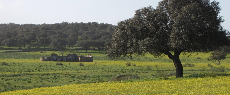 Excursión en 4x4 por la dehesa de Cáceres