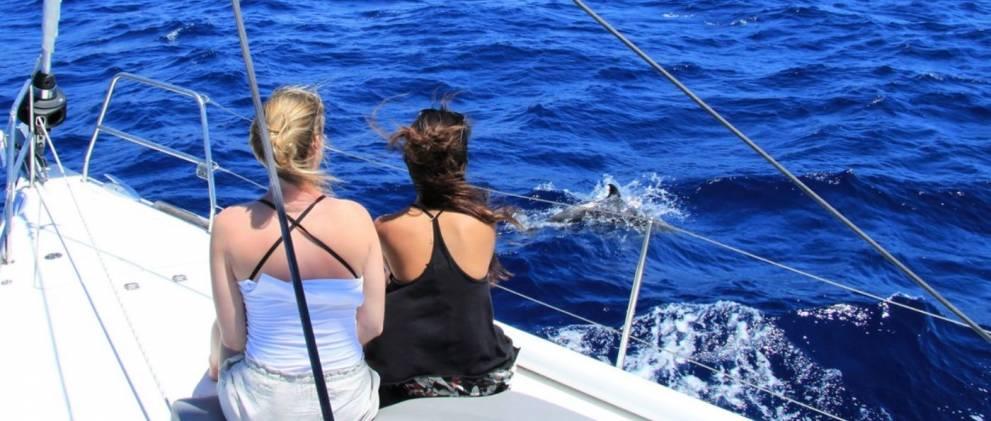 Paseo en velero con avistamiento en Puerto Colón