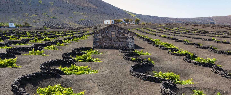 Ruta del vino por Lanzarote