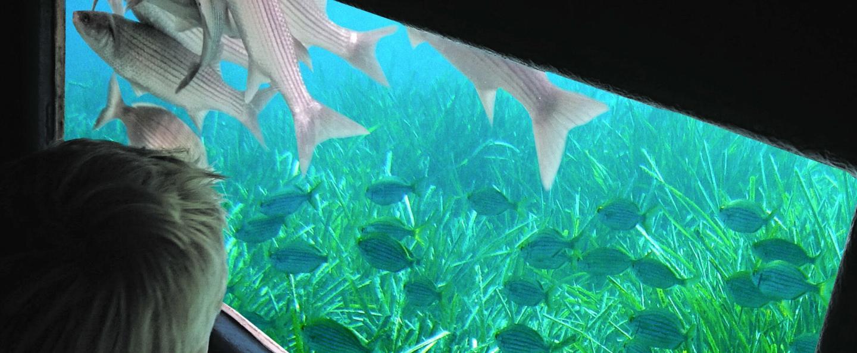 Visión submarina Puerto de Mahón