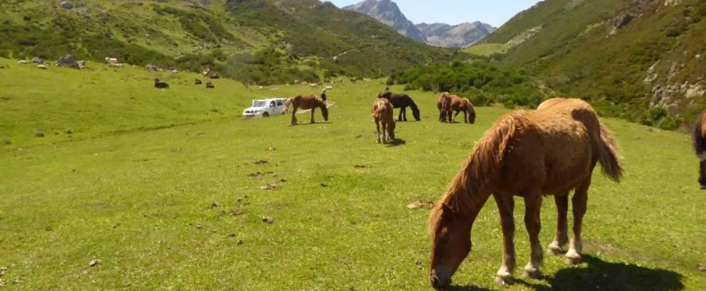 Excursión 4x4 Lago Curavacas