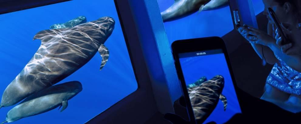 Avistamiento de ballenas y delfines en Costa Adeje