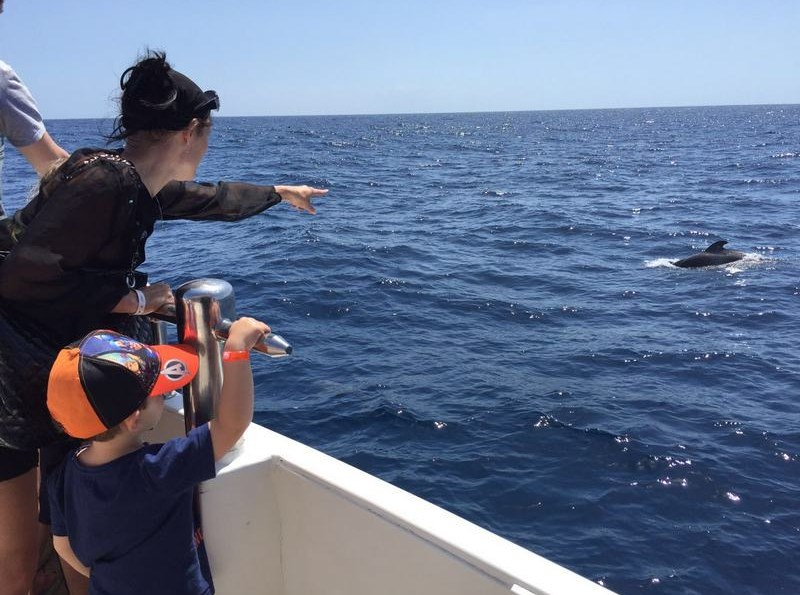 Dolphin and Whale watching Costa Adeje