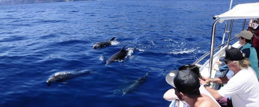 Avistamiento de cetáceos en Los Gigantes