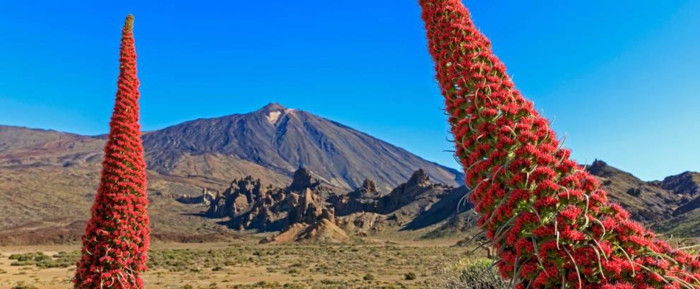 Excursión al Teide de medio día