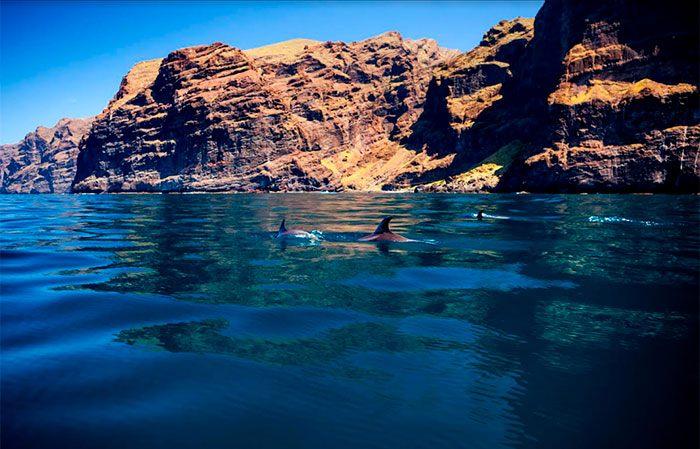 Delfines Tenerife