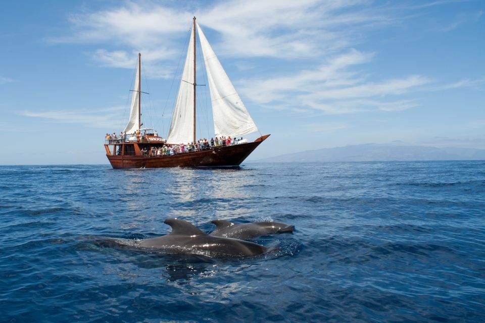 Barco Peter Pan Delfines