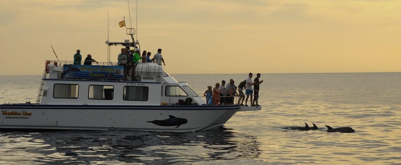 Paseo en catamarán en Los Gigantes