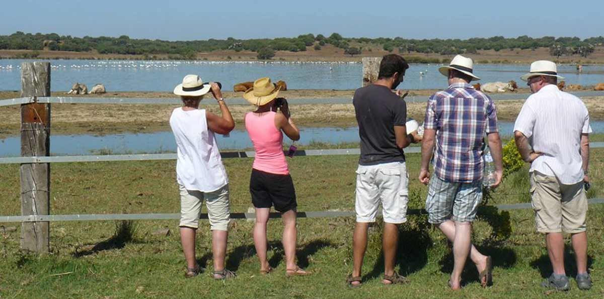 Doñana National Park Private Tour from Seville