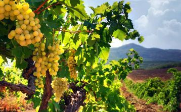Winery Tour and Wine tasting from Seville